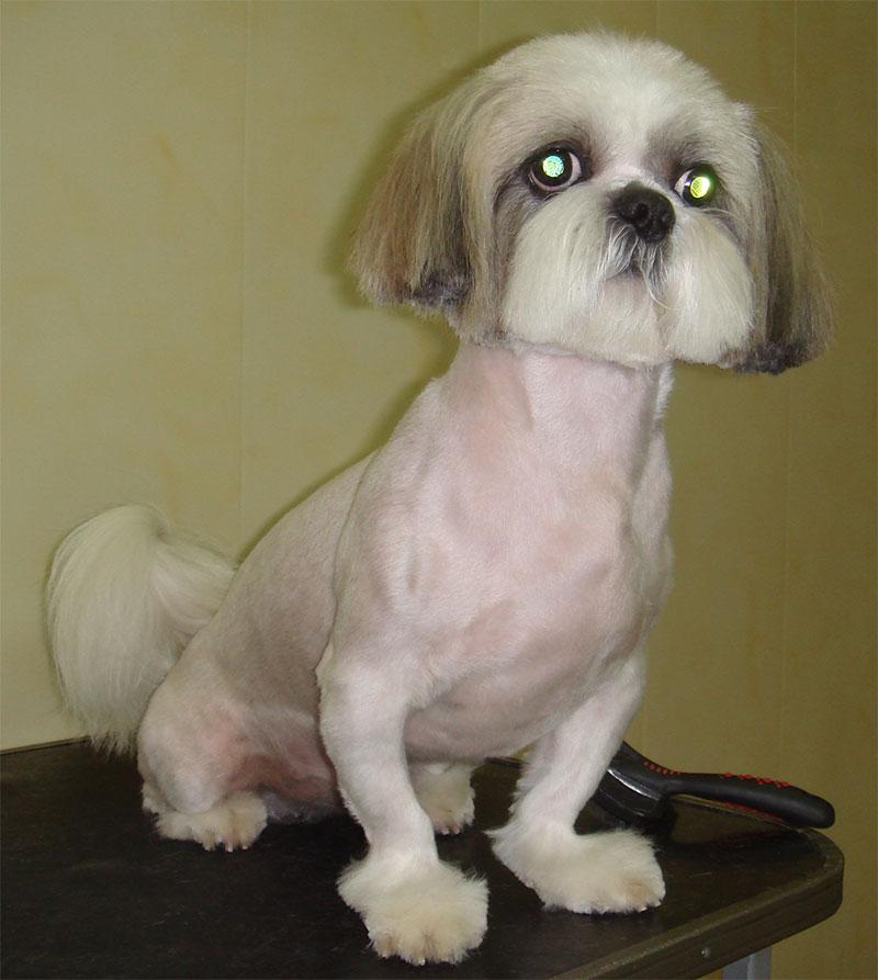 фото по собак